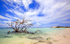 a picture of a tree in the water at baby beach aruba, one of aruba's finest beaches