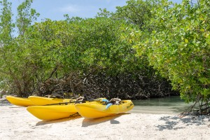 a picture of canoes at the mangroves at mangel halto beach aruba