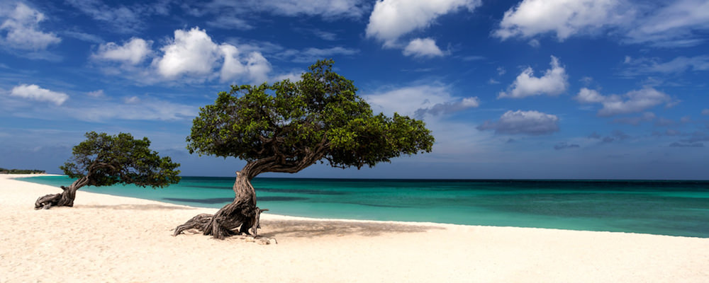 a about aruba picture of a aruba tree