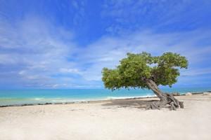 a picture of eagle beach aruba