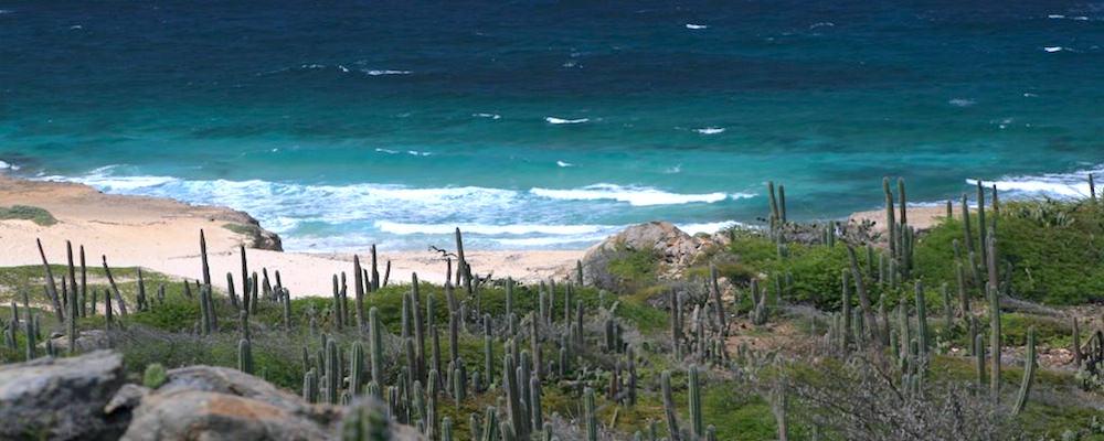 a picture of wariruri beach
