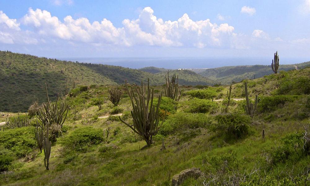 jamanota hill