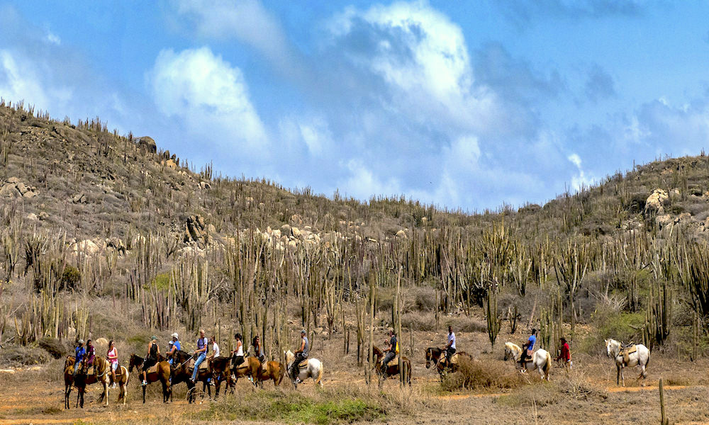 a picture of people going horseback riding in aruba