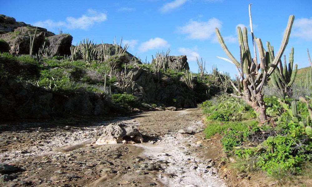rooi prins arikok national park