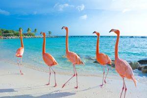 Flamingo Beach, Renaissance Island, Aruba, Dutch Caribbean.